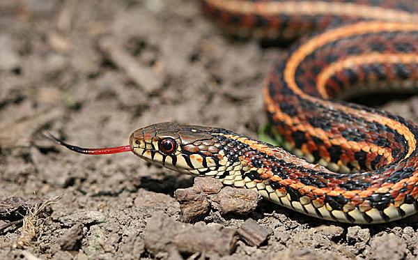 yılan öldürmek