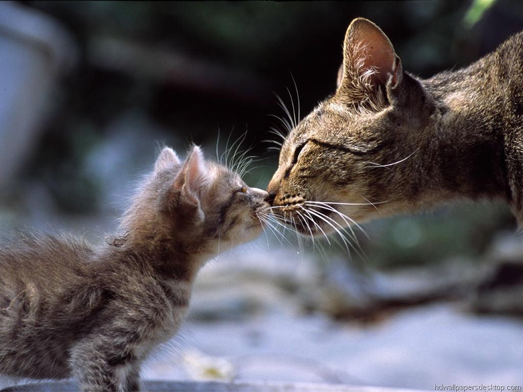 Rüyada Kedinin Doğurduğunu Görmek