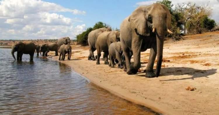 afrikaya gitmek