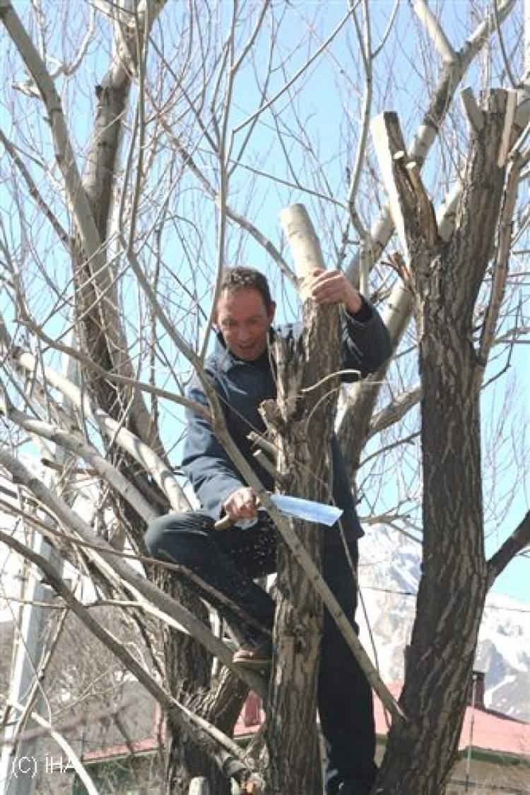 Rüyada Ağaç Budandığını Görmek
