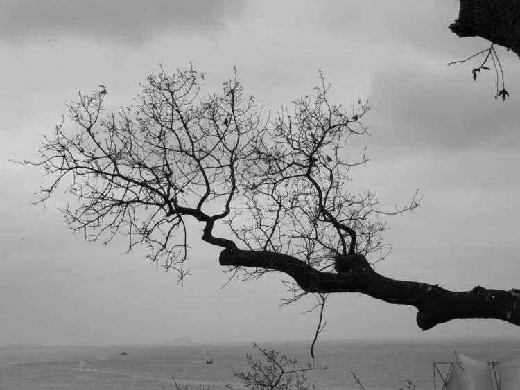 Rüyada Ağaç Dalı Görmek