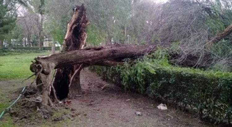 ağaç devrilmesi