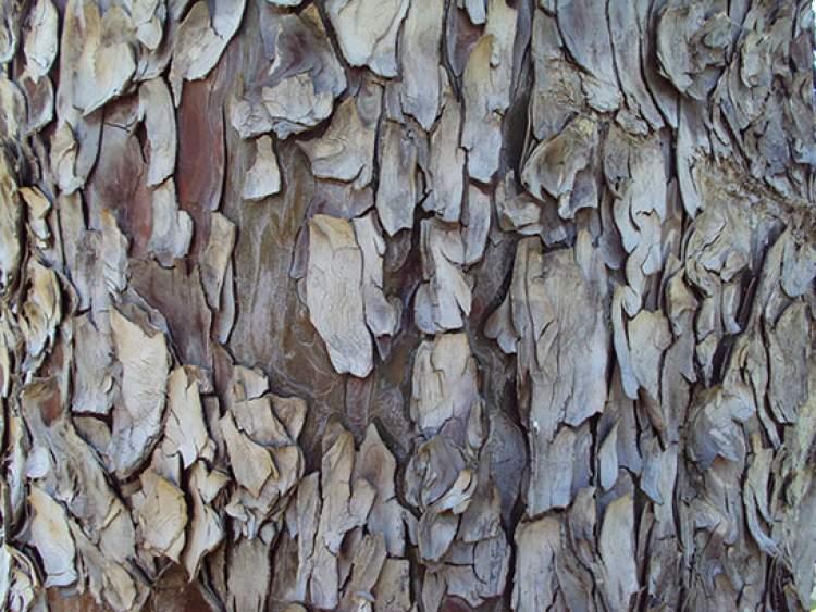 ağaç kabuğu görmek