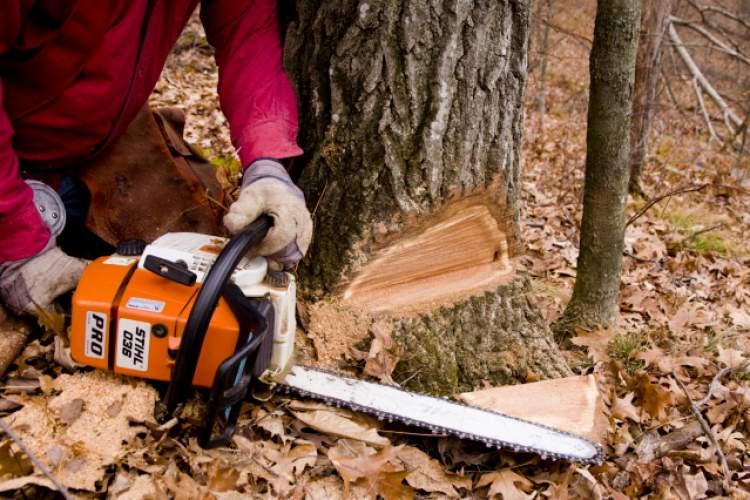 ağaç kesilmesi