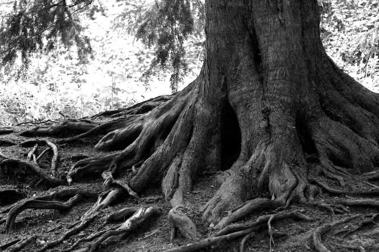 ağaç kökü görmek