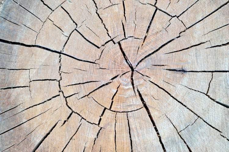 ağaç kütüğü görmek