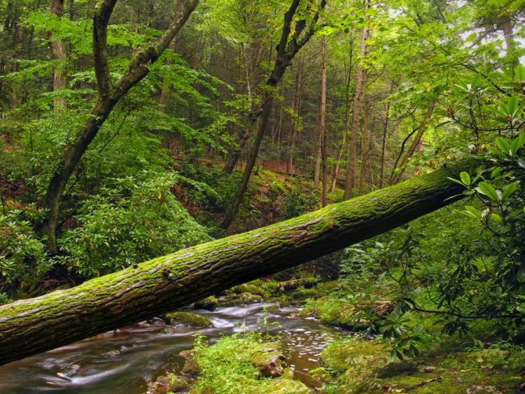 ağaç yıkılması