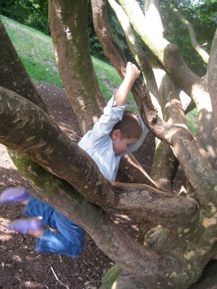 ağaca çıkmak