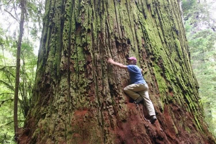ağaca tırmanmak
