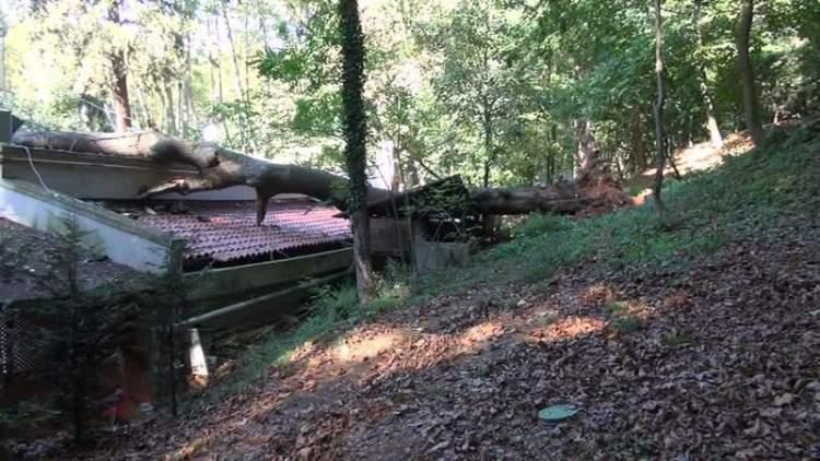 ağacın devrildiğini görmek
