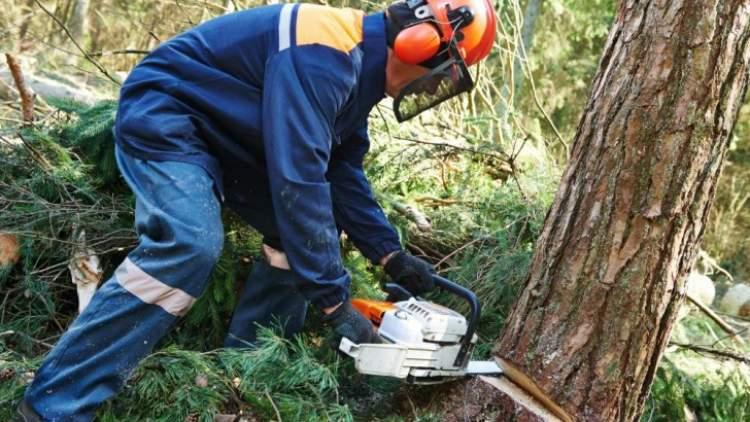 ağacın kesildiğini görmek