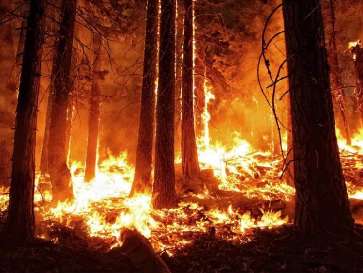 ağacın yandığını görmek