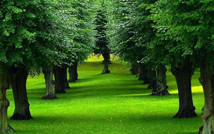 ağaçlar görmek