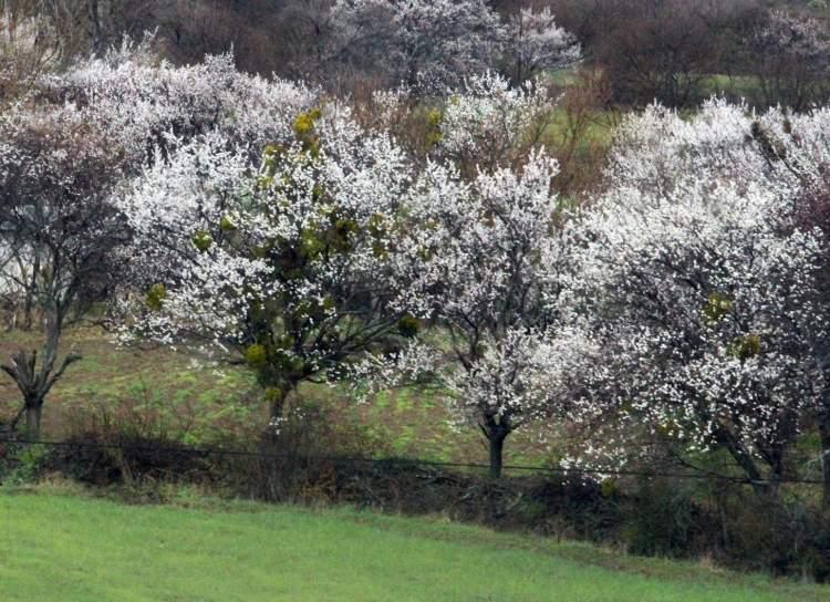 ağaçların çiçek açtığını görmek