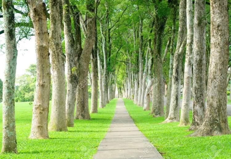 ağaçlı yol görmek