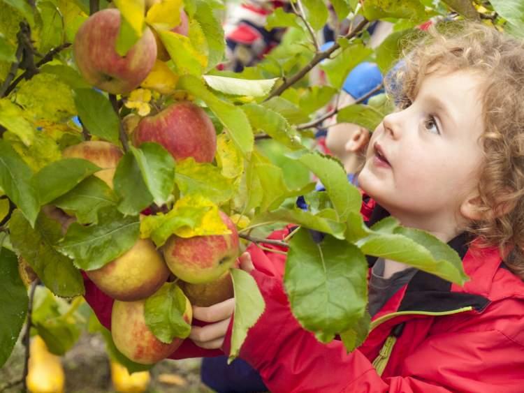 ağaçtan meyve koparıp yemek