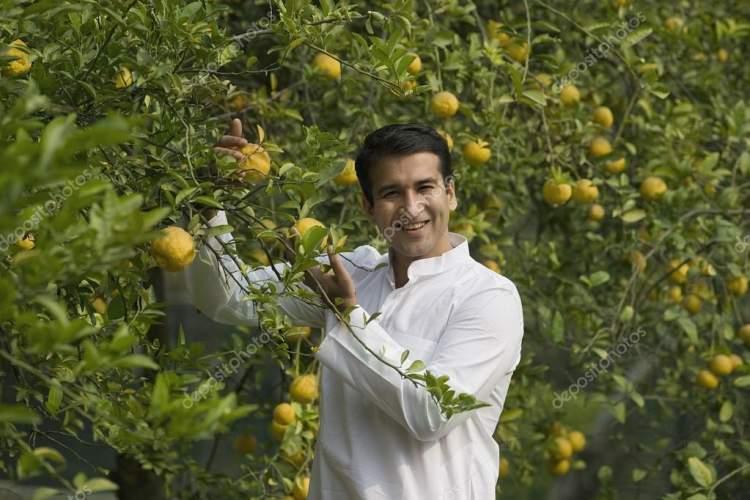 ağaçtan meyve toplamak