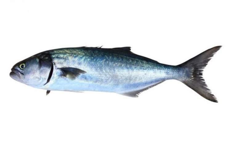ağızdan balık çıkması