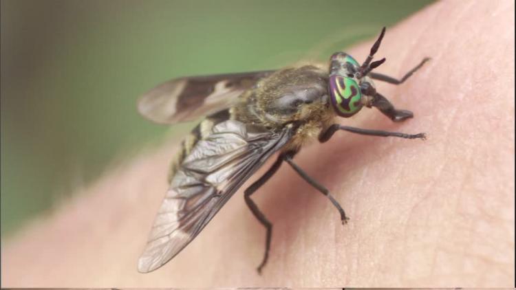 ağızdan sinek çıkması
