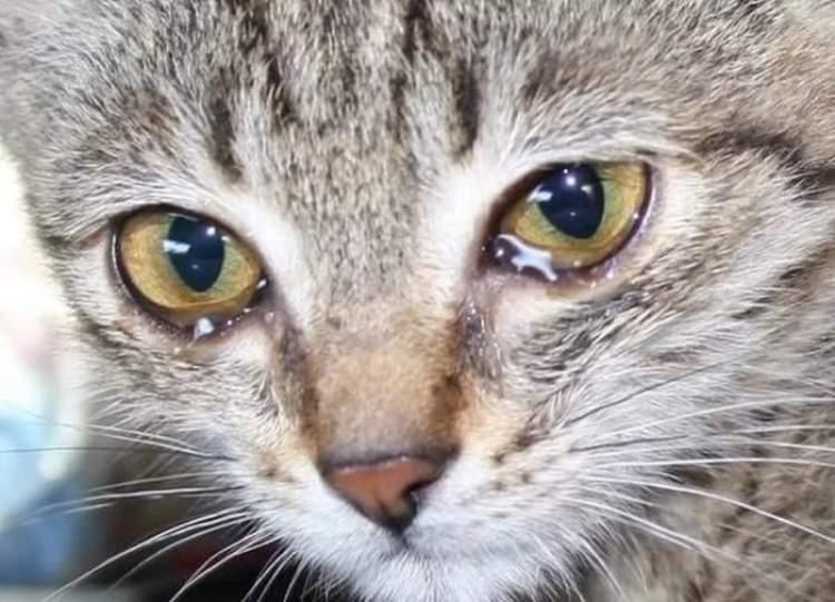 ağlayan kedi görmek
