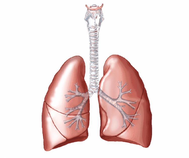 akciğer görmek