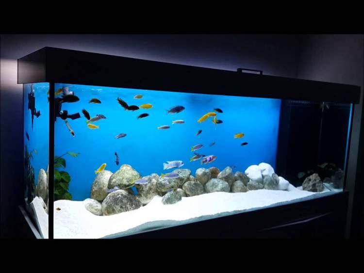 Rüyada Akvaryumda Balık Görmek