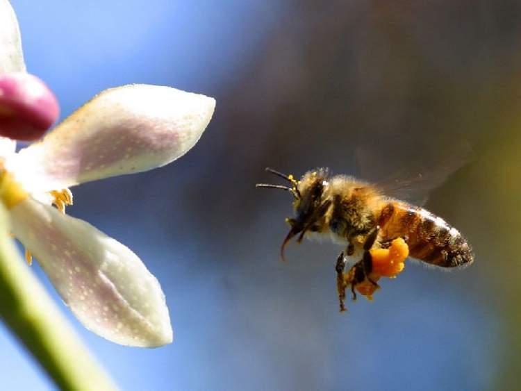 arı iğnesi görmek