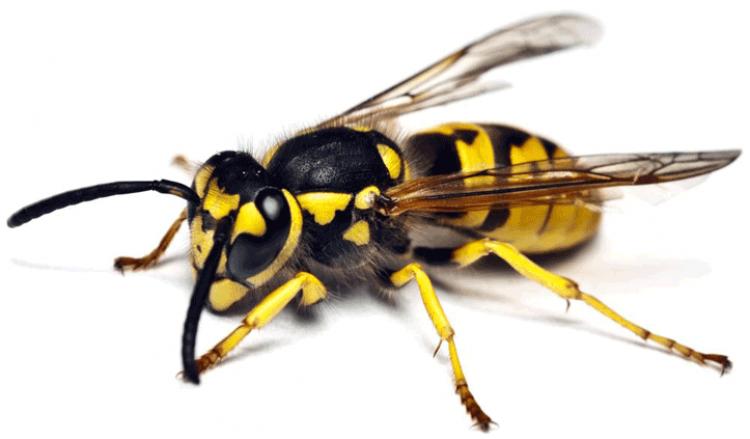 arı öldürmek