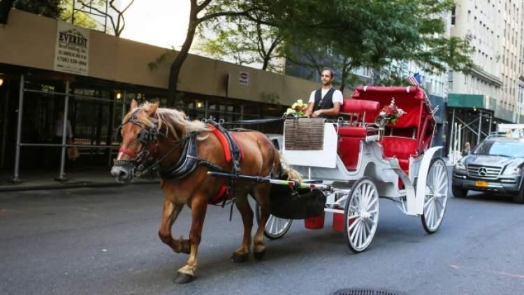 at arabası sürmek