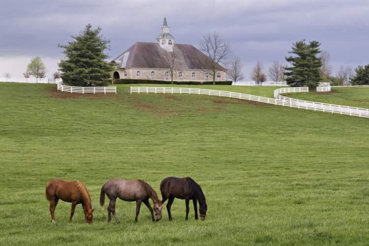 at çiftliği görmek
