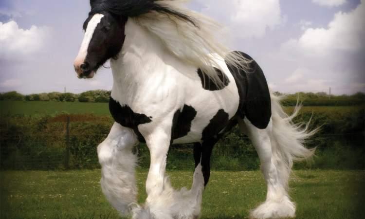 at kafası görmek