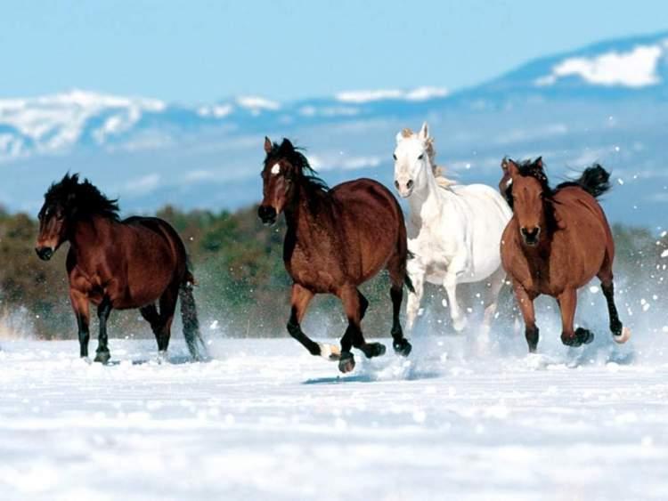 at sürüsü görmek
