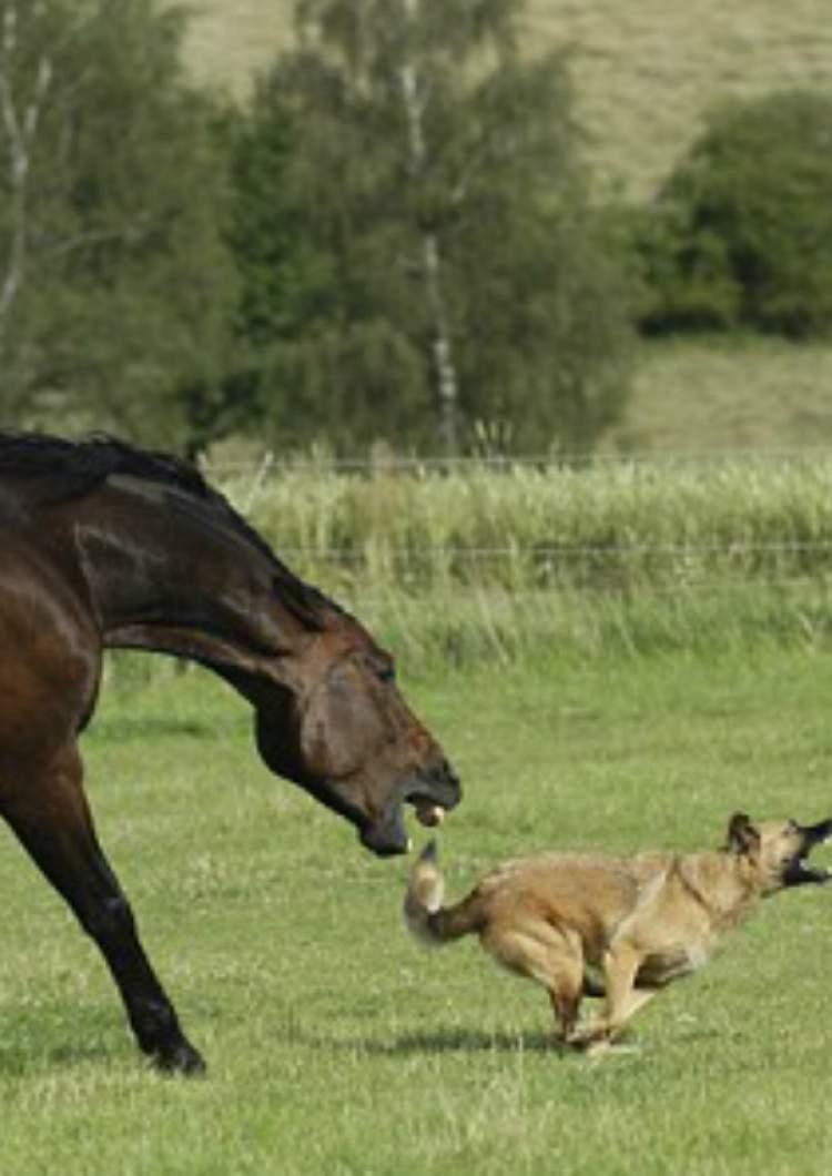 atın ısırması
