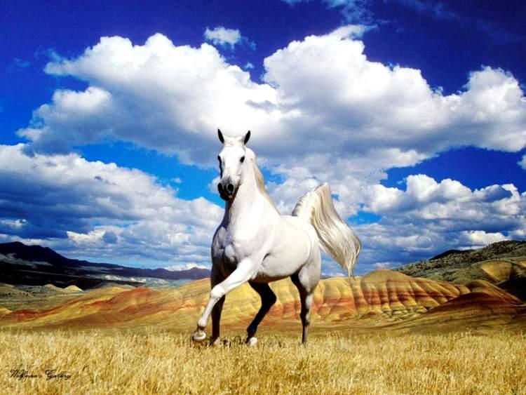 atın kesildiğini görmek