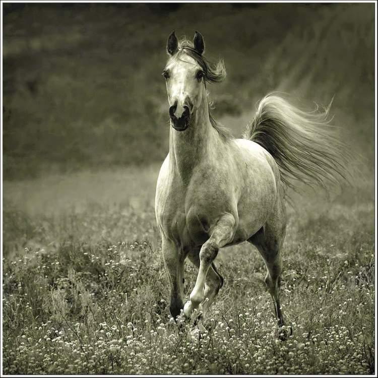 atın kovaladığını görmek