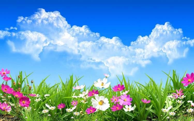 Rüyada Bahar Çiçekleri Görmek