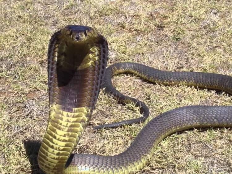 bahçede yılan görmek