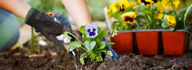 bahçeye çiçek dikmek