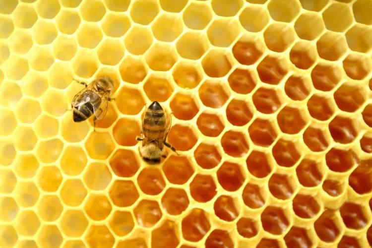 bal arısı görmek