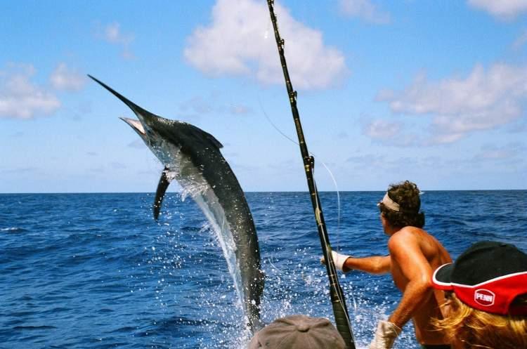 balık tutmak görmek