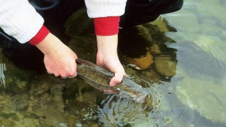 Rüyada Balık Yakalamak Elle