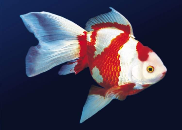 Rüyada Balıkla Konuşmak