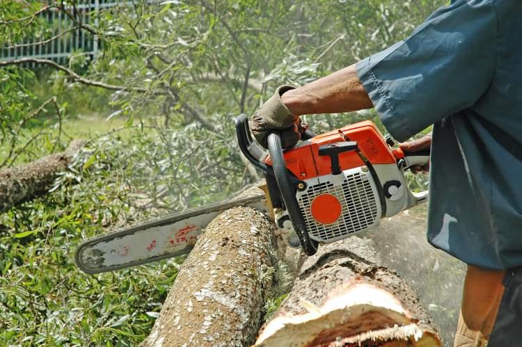 başkasının ağaç kestiğini görmek