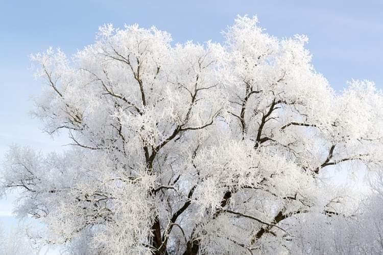 beyaz ağaç görmek