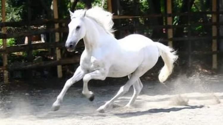 beyaz at görmek