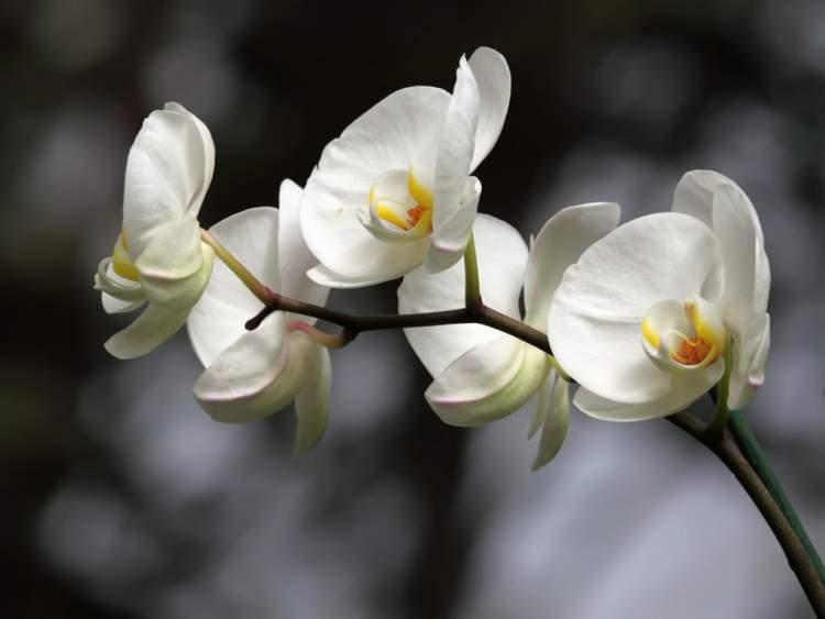 beyaz çiçek almak