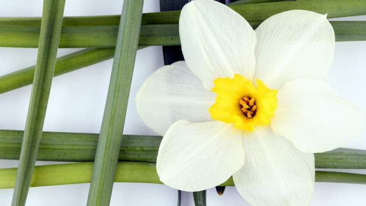 beyaz çiçek görmek