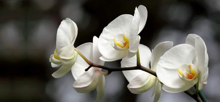 beyaz çiçek toplamak