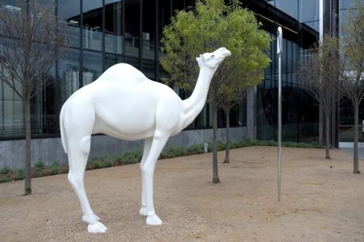beyaz deve görmek