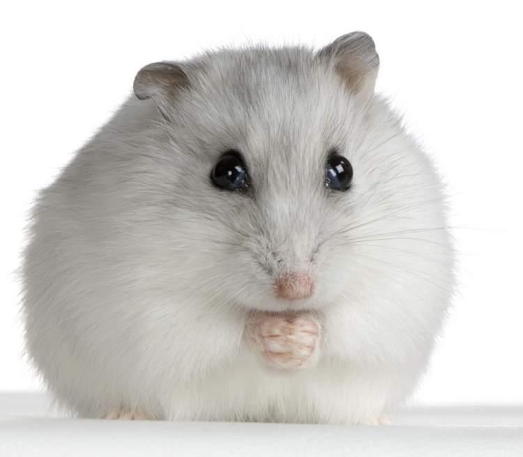 beyaz fare yakalamak